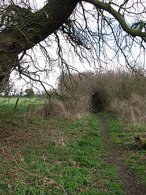 English: Approaching a tunnel Here the path le...