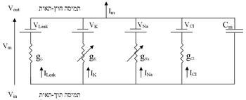 Equivalent circuit for the cell membrane in th...
