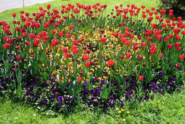 File:Flower-bed-Moscow.JPG