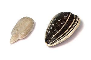 English: Sunflower seeds, hulled and dehulled....