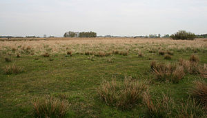 English: Field in nature area Het Twiske in No...