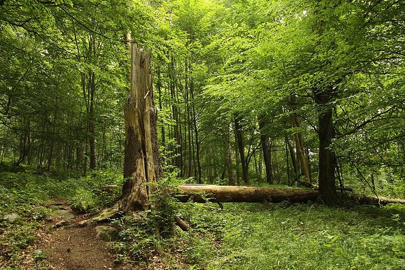 File:Nature reserve Žižkův vrch in summer 2012 (21).JPG