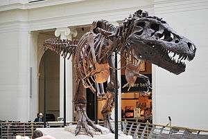 Sue the T-Rex at the Field Museum of Natural H...