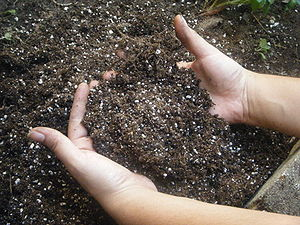 English: This is a picture of hands sifting th...