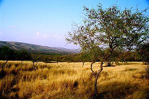 English: Aravalli Range inside Ranthambhore, R...