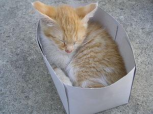 My cat Topi in a paper box