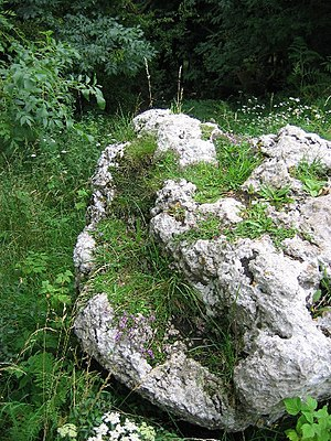 English: Limestone Boulder. Summit of Warton C...