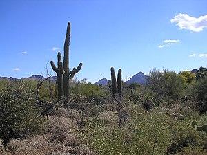 English: taken at the Arizona-Sonora Desert Museum
