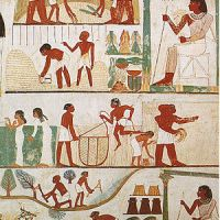 Recent Botanical Studies on Plant Materials from Ancient Egypt