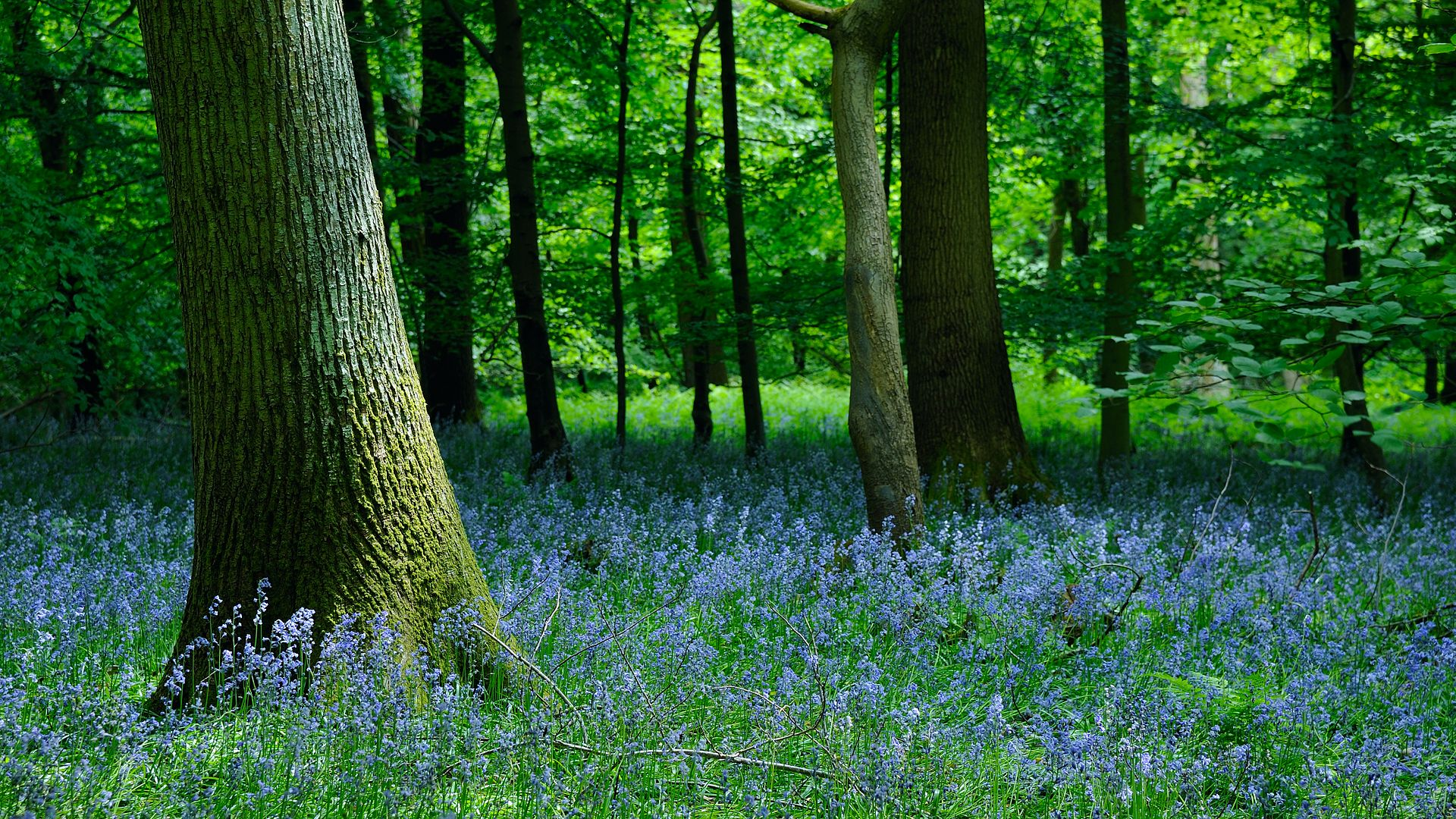 Forest Of Dean Travel Guide At Wikivoyage