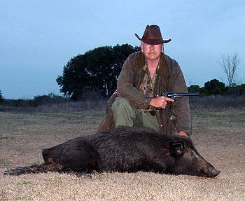 English: Feral Hog in Coryell County Texas