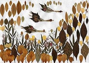 Pressed flowers: Wild geese 押花:雁