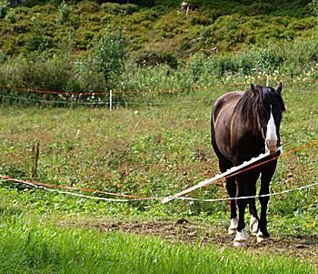 Horse and Electric fence, – Who, me? I d...