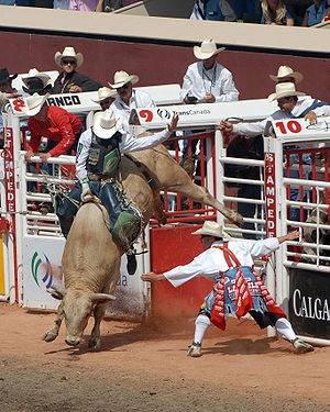 Bull riding at the Calgary Stampede. The