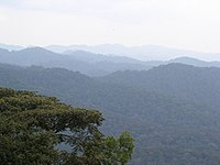 Bwindi mountains.jpg