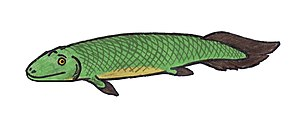 English: Illustration of Tiktaalik roseae, a S...