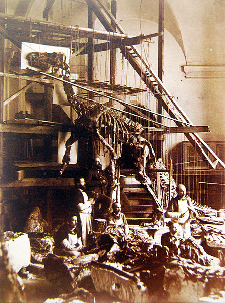 File:Bernissart Iguanodon mounted skeleton.jpg