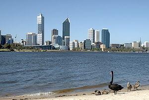 Black Swan on the Swan River, Perth Western Au...