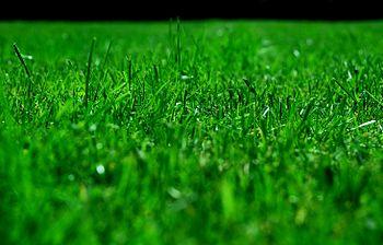 Lawn, Gräsmatta