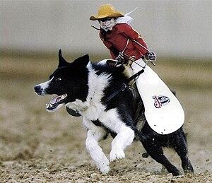 Monkey riding a dog.