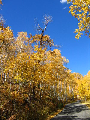 Alpine Loop near Sundance in the fall.