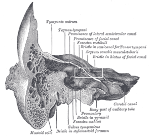 Hiatus for greater petrosal nerve