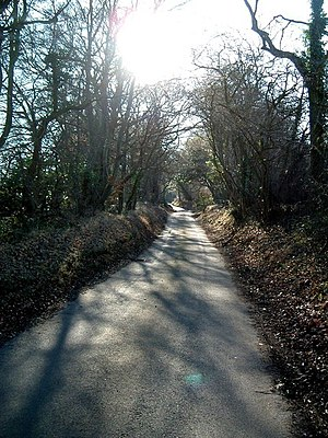 Rossway Lane, south of Tinker's Lodge. Dappled...