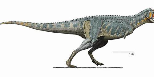File:Carnotaurus DB 2.jpg