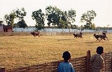 Madura bull racing 1999.jpeg