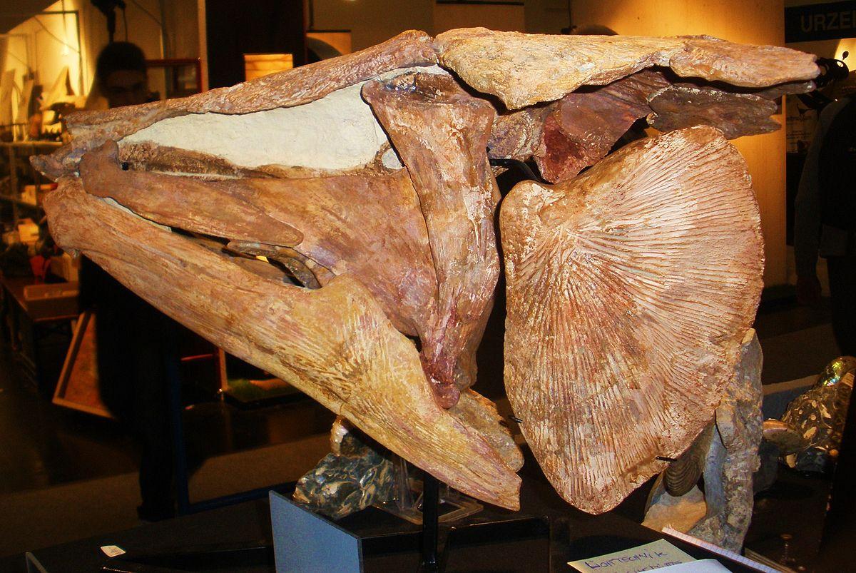 Mawsonia Fish Wikipedia