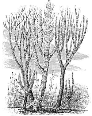 Silurian vegetation restored