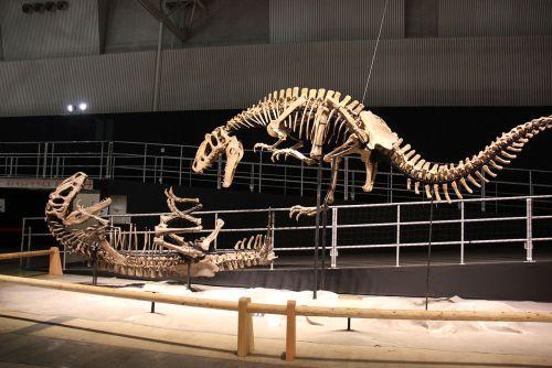 Laika ac Dino Kingdom 2012 (7882288828).jpg