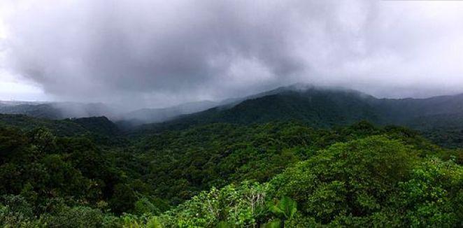 El Yunque Rain Forest (22629347049)