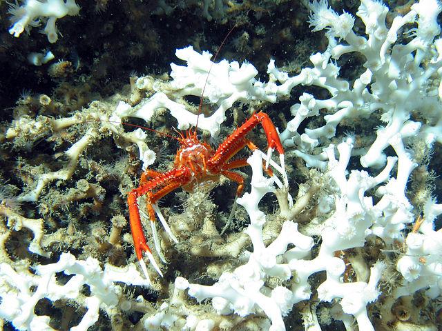Korallhabitat