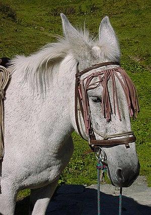 Grey Mule.