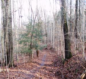 One of the hiking trails near Fall Creek in Wa...