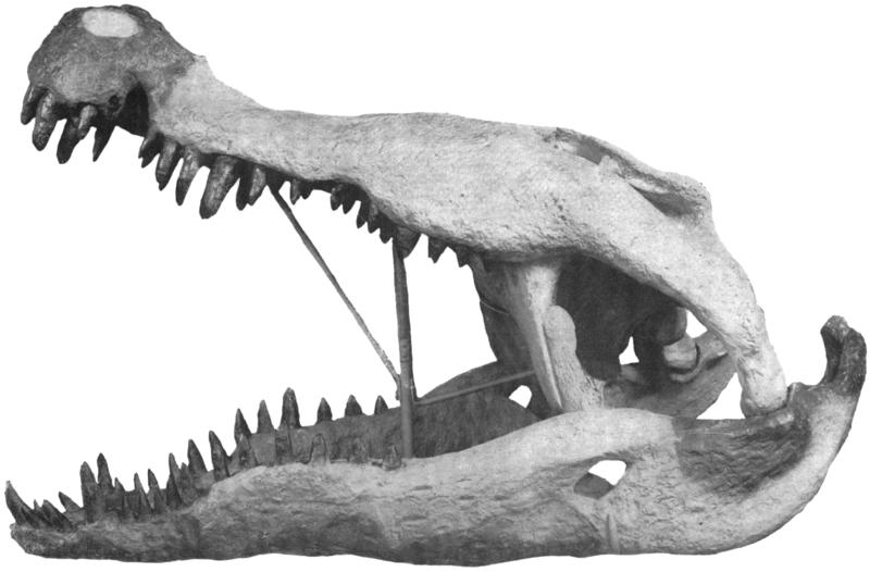 File:1954-Colbert-Bird-Phobosuchus.png
