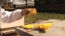 File:Beekeeping.theora.ogv