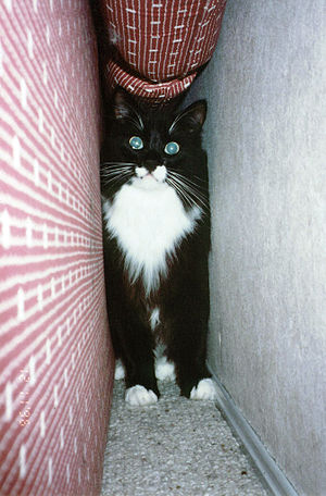 Cat hiding behind the couch