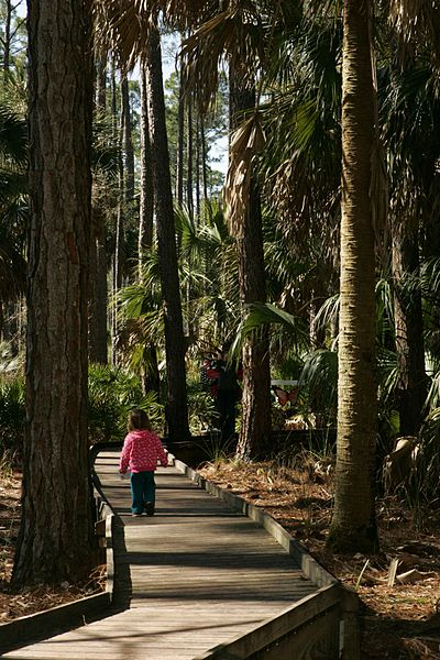 File:Little girl among tall trees on boardwalk.jpg