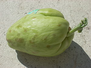 English: Sprouting chayote (Sechium edule), sh...