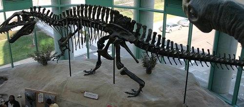 File:Acrocanthosaurusskeleton.jpg