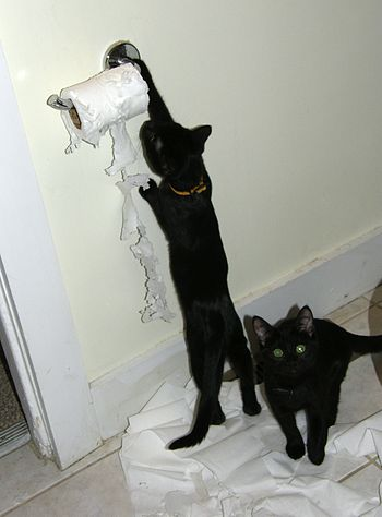 English: Two cats in a bathroom; Moxie attacks...