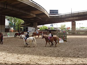English: Riding lessons under Westway There ar...