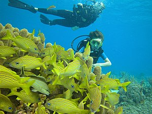 Scuba divers observing fish and coral