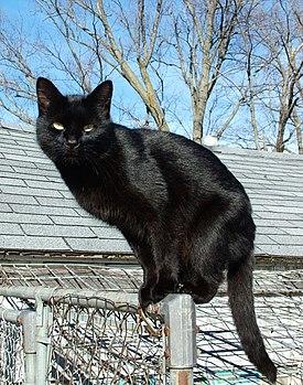 Ini kucing mirip banget sama Openg..
