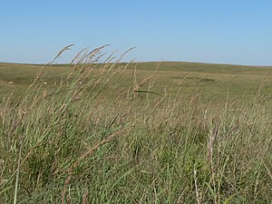 English: grass at , located on west side of ju...
