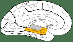 Surco Temporal Superior anterior