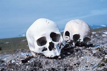 "Skulls on a Beach: ""Currents carry many d..."