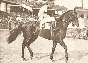 Royal Gem (AUS) was a versatile Thoroughbred r...